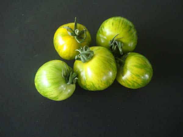 Tomate-Green-Zebra