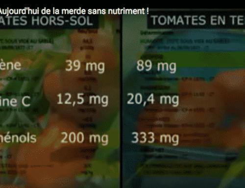Pourquoi devez-vous acheter vos tomates chez Au Fil des Saisons !