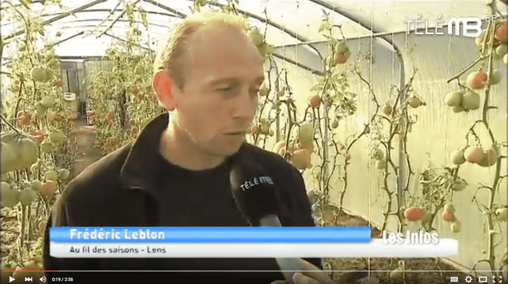 producteur-legumes-tomates